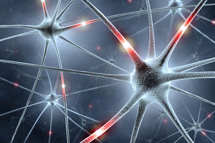 ForInter: Bavarian research network 'Interaction of Brain Cells'