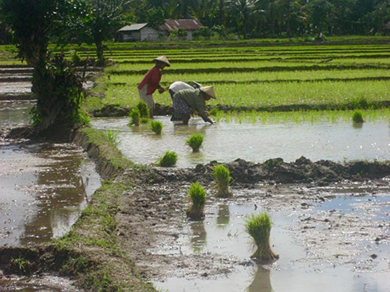 IndORGANIC: Passau Researchers prepare real Green Transformation Indonesia