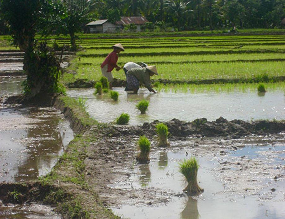 BMBF-Projekt IndORGANIC: Passauer Team bereitet grüne Transformation in Indonesien vor